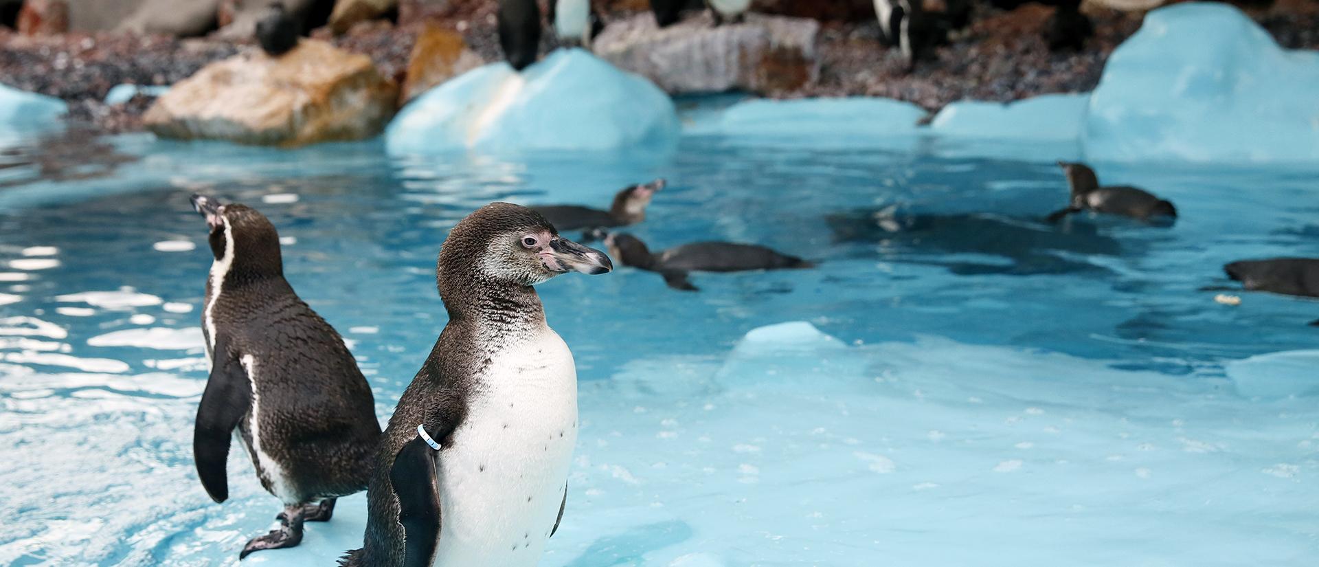 Aquariums & Aquaculture